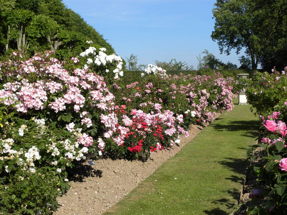 Rose Garden and vegetable Of Mesnil Geoffroy Castle photo 3