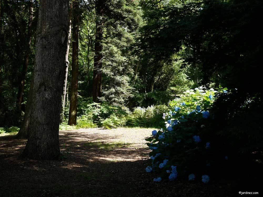 Parque y jard n bosque de los moutiers photo 11 for Carson bosque y jardin