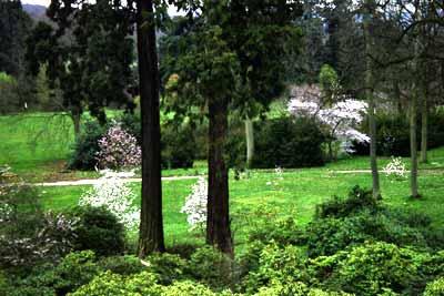 Jardins historique et botanique du ch teau de thoiry photo 3 for Jardin botanique 78