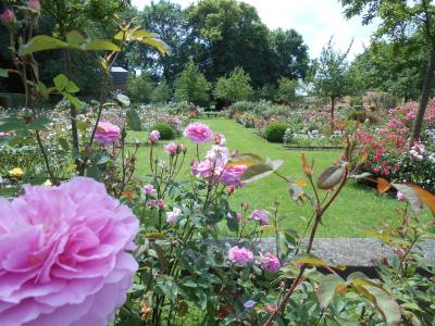 Rose Garden and Park Of the Castle Of Rambures photo 12