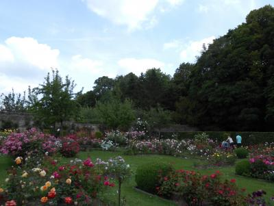 Rose Garden and Park Of the Castle Of Rambures photo 4