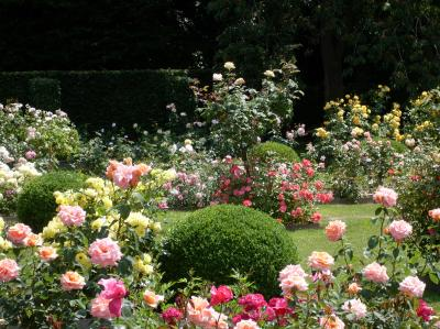 Rose Garden and Park Of the Castle Of Rambures photo 5