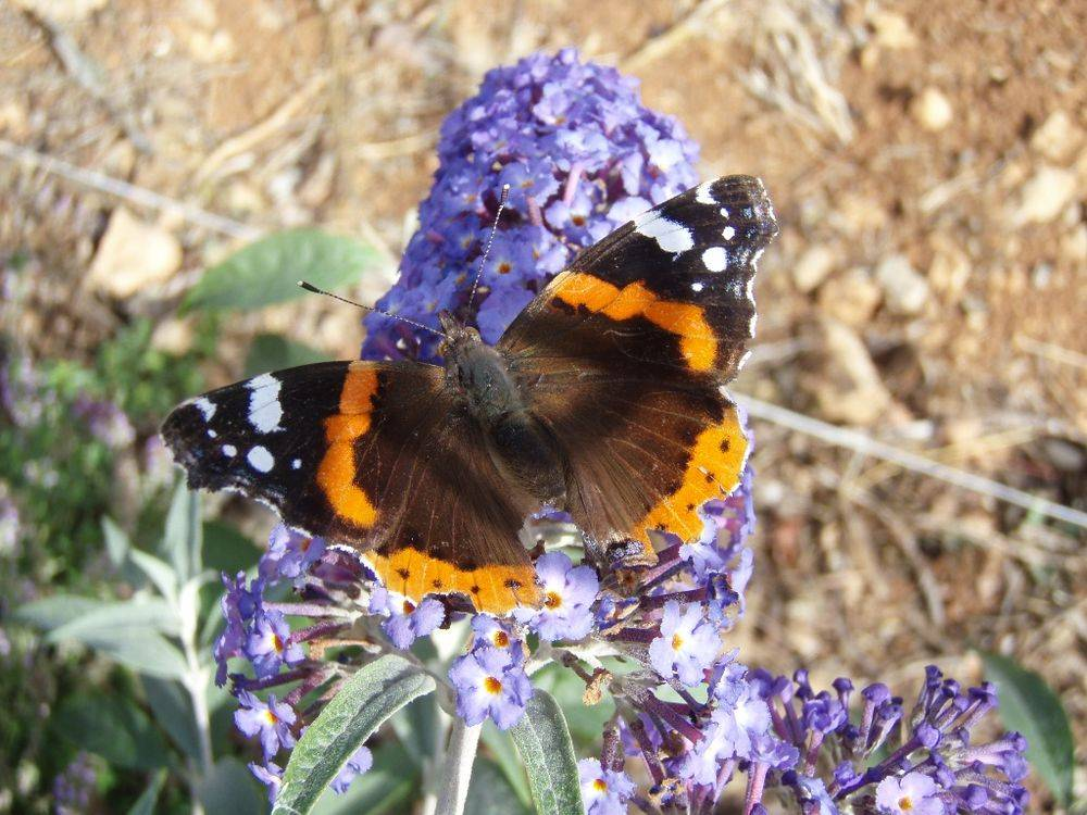 The Butterfly and Insect Garden photo 3