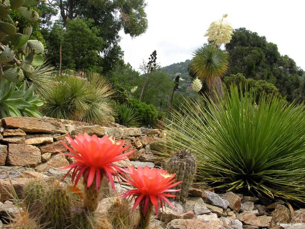 Domaine du rayol le jardin des m diterran es photo 2 - Domaine du rayol le jardin des mediterranees ...