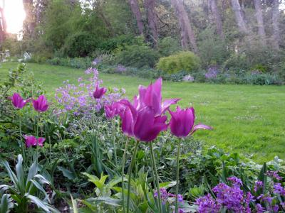 Jardin de Liliane photo 0