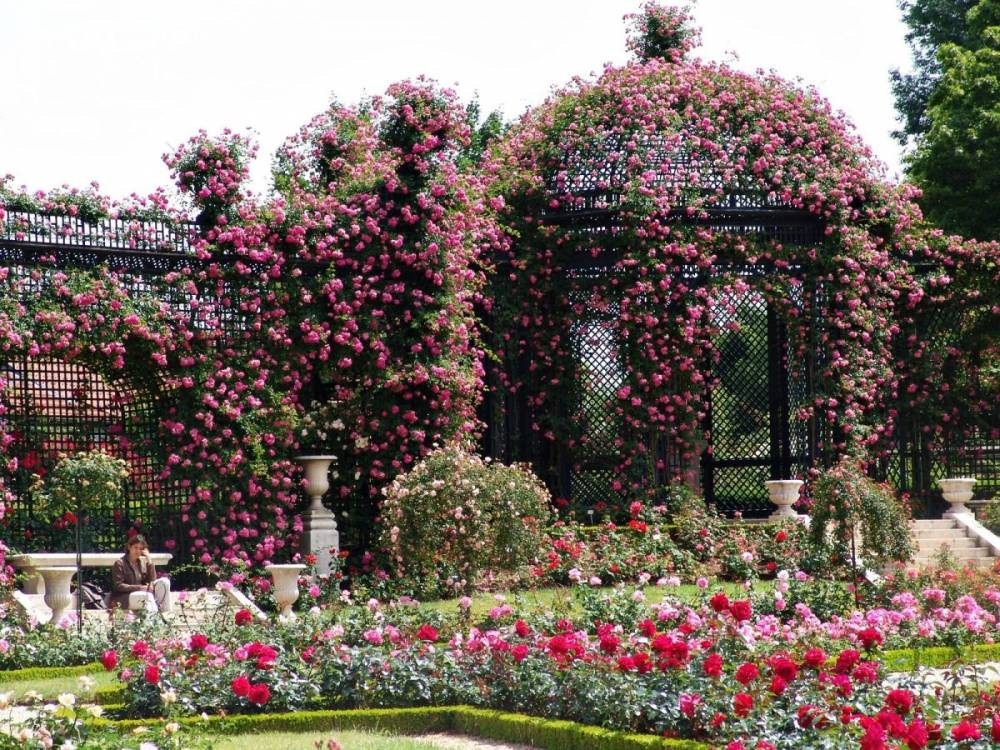 The County Rose Garden Of Val-De-Marne