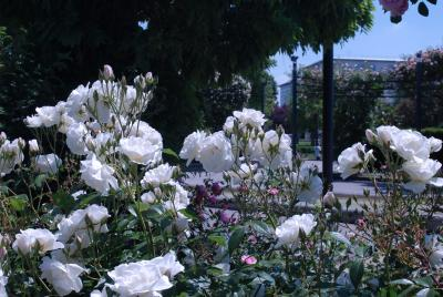 Le Jardin des Roses photo 3