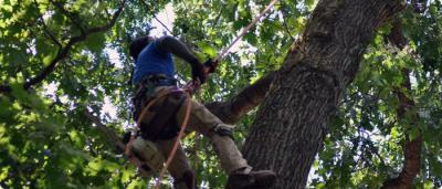 abattage arbre ille et vilaine