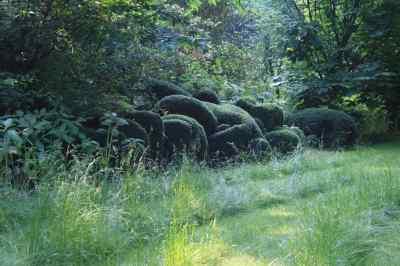 Entreprise du paysage les jardins de s ricourt photo 1 for Entreprise du paysage