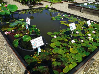 Nursery The Water Gardens photo 0