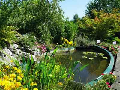 P pini re les jardins aquatiques photo 2 - Les jardins aquatiques saint didier sur chalaronne ...