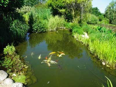 P pini re les jardins aquatiques photo 12 - Les jardins aquatiques saint didier sur chalaronne ...