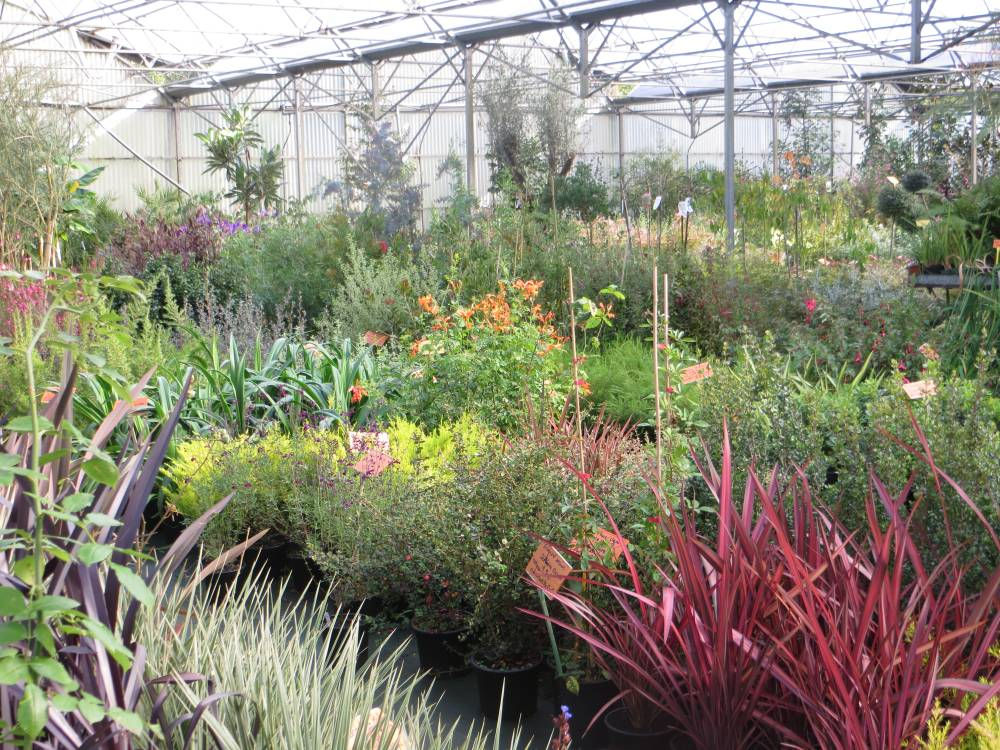 The Port de Carhaix Nurseries photo 10