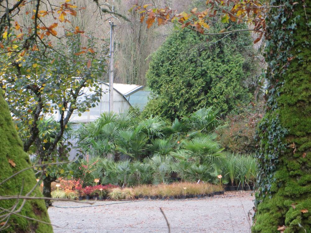 The Port de Carhaix Nurseries photo 2