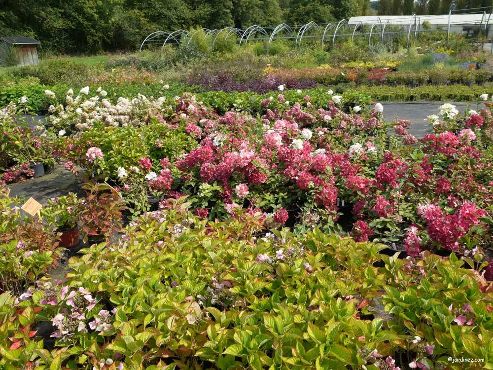The Port de Carhaix Nurseries photo 5