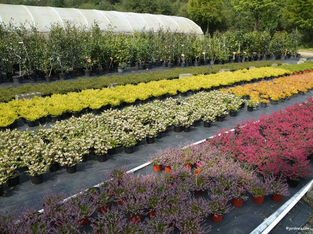 The Port de Carhaix Nurseries photo 7