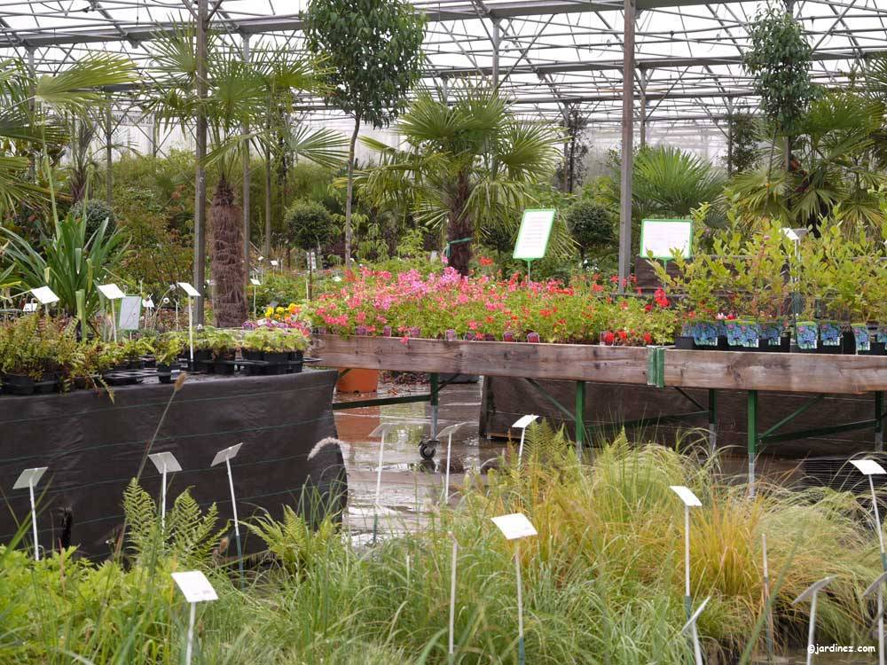 Huchet Nurseries photo 2