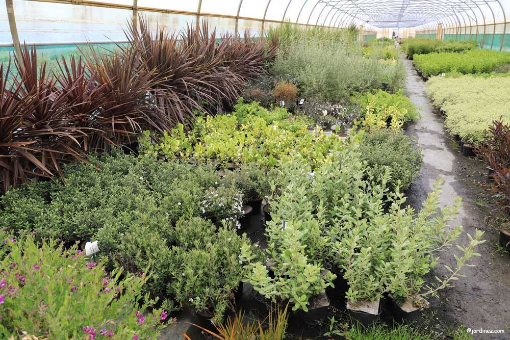 Prunier Nurseries photo 10