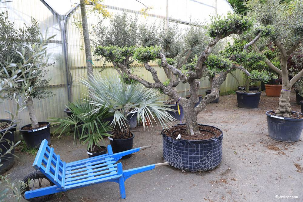 Prunier Nurseries photo 12