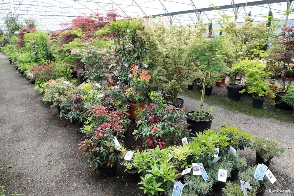 Prunier Nurseries photo 2