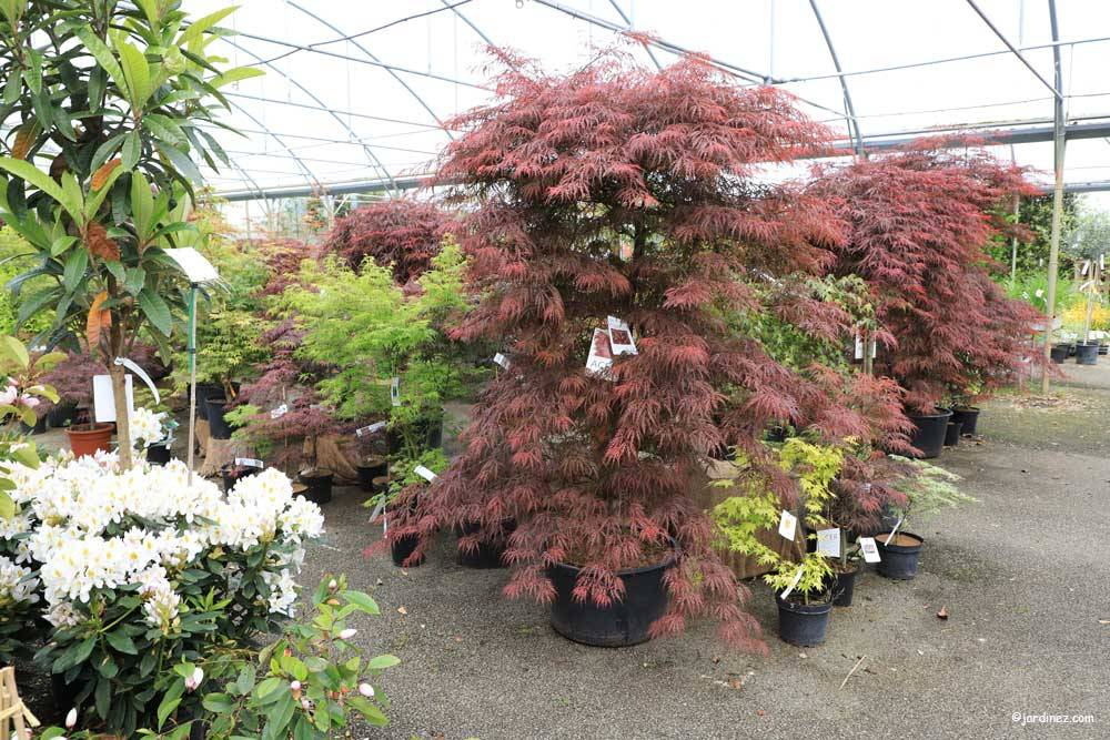 Prunier Nurseries photo 3