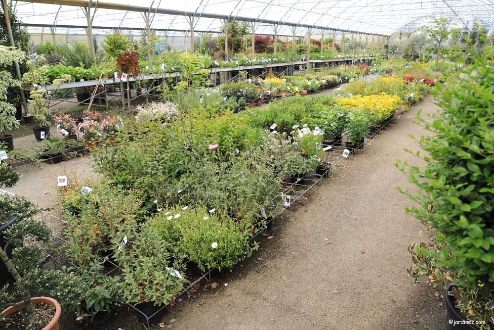 Prunier Nurseries photo 5