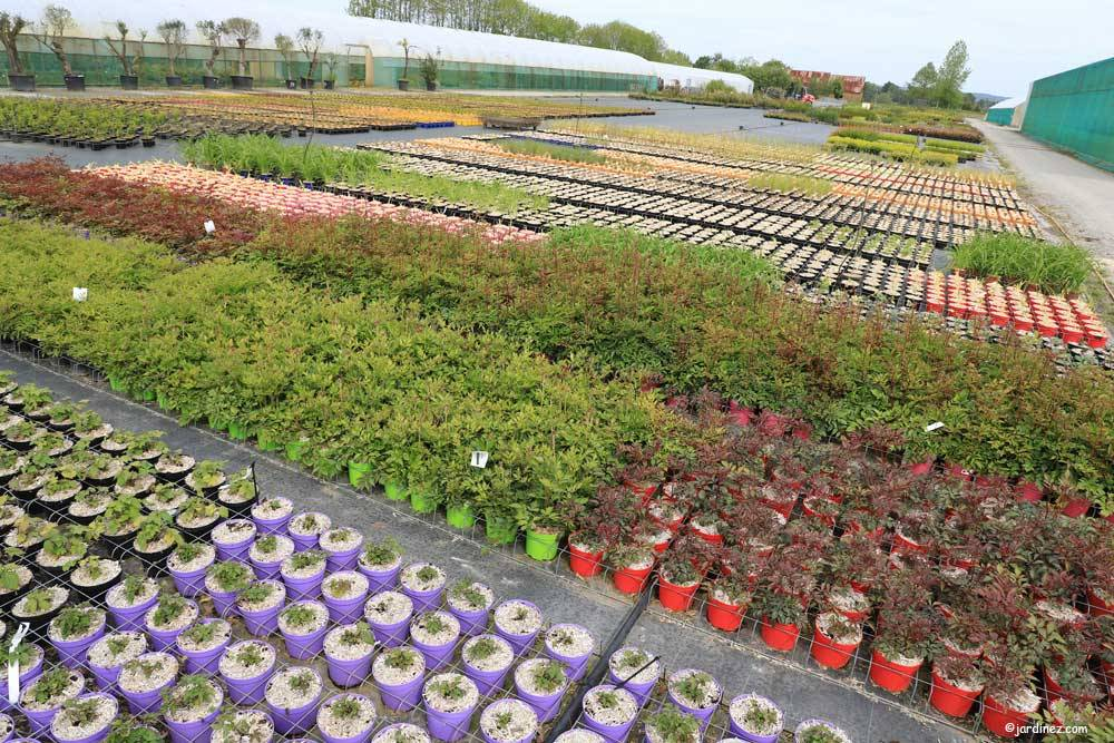 Prunier Nurseries photo 8