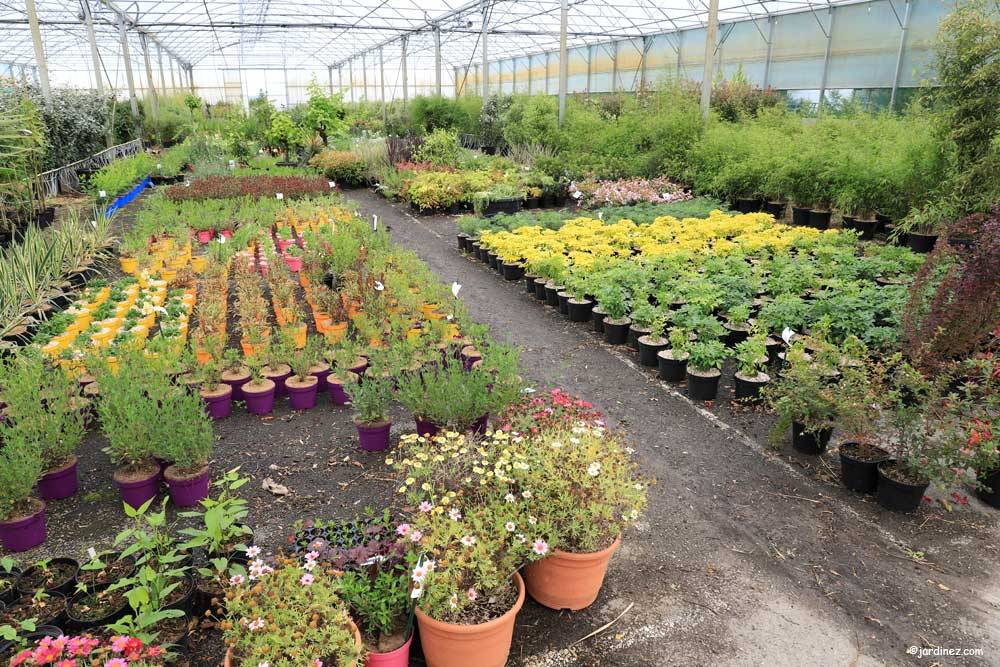 Prunier Nurseries photo 9
