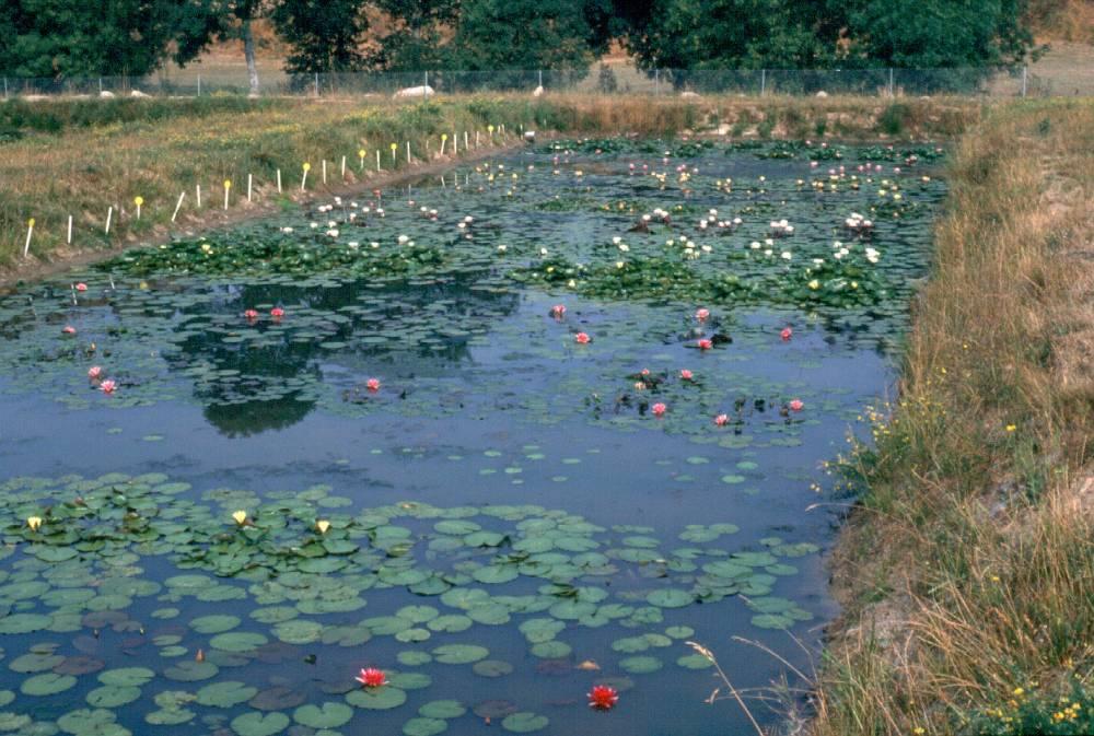 Aquatique de la moine est une p pini re sp cialis e dans for Vpc jardinerie