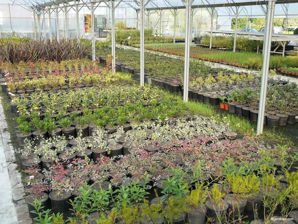 Atlantic Nursery photo 1