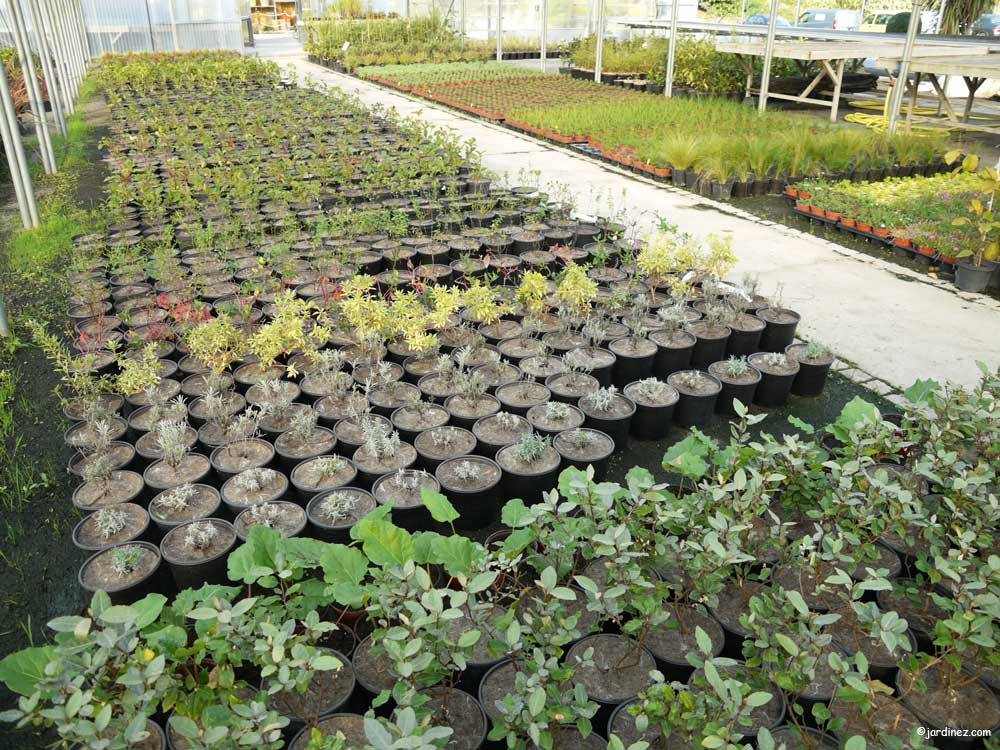 Atlantic Nursery photo 10