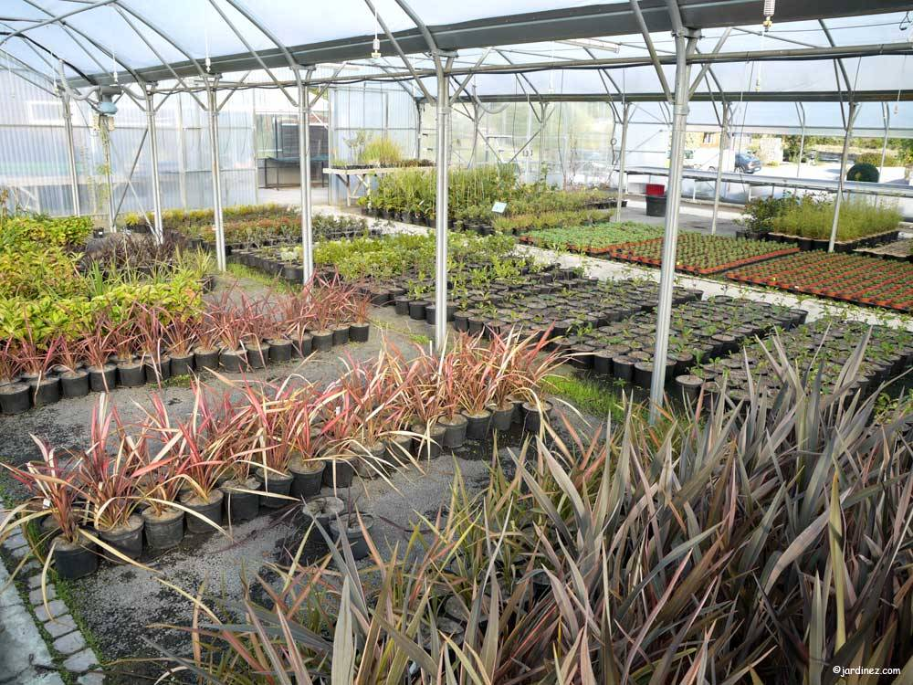 Atlantic Nursery photo 2