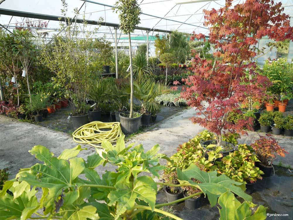 Atlantic Nursery photo 3