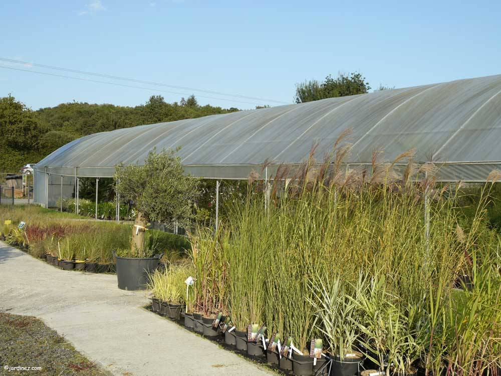 Atlantic Nursery photo 4