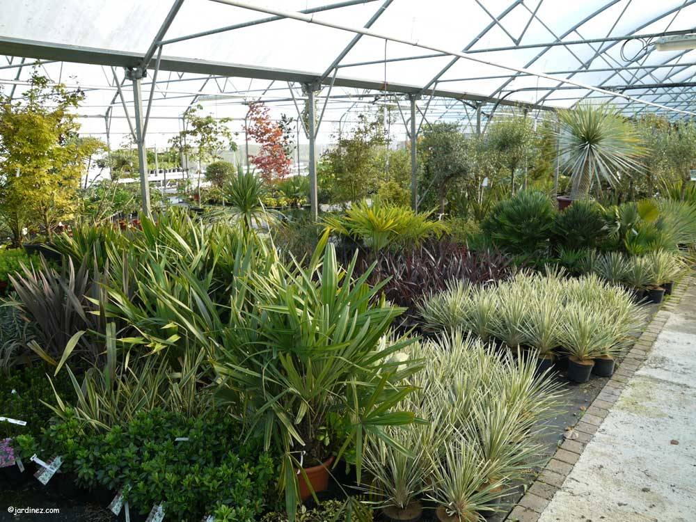 Atlantic Nursery photo 9