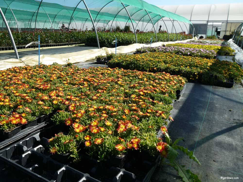 Leaderplant Nursery photo 0