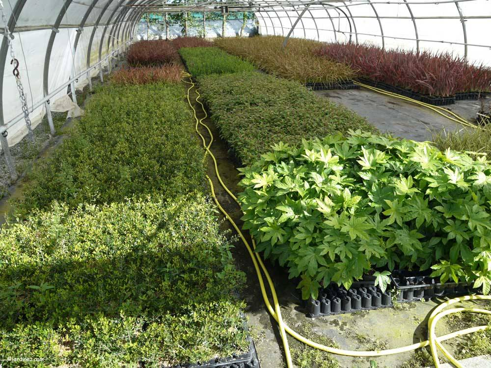 Leaderplant Nursery photo 1