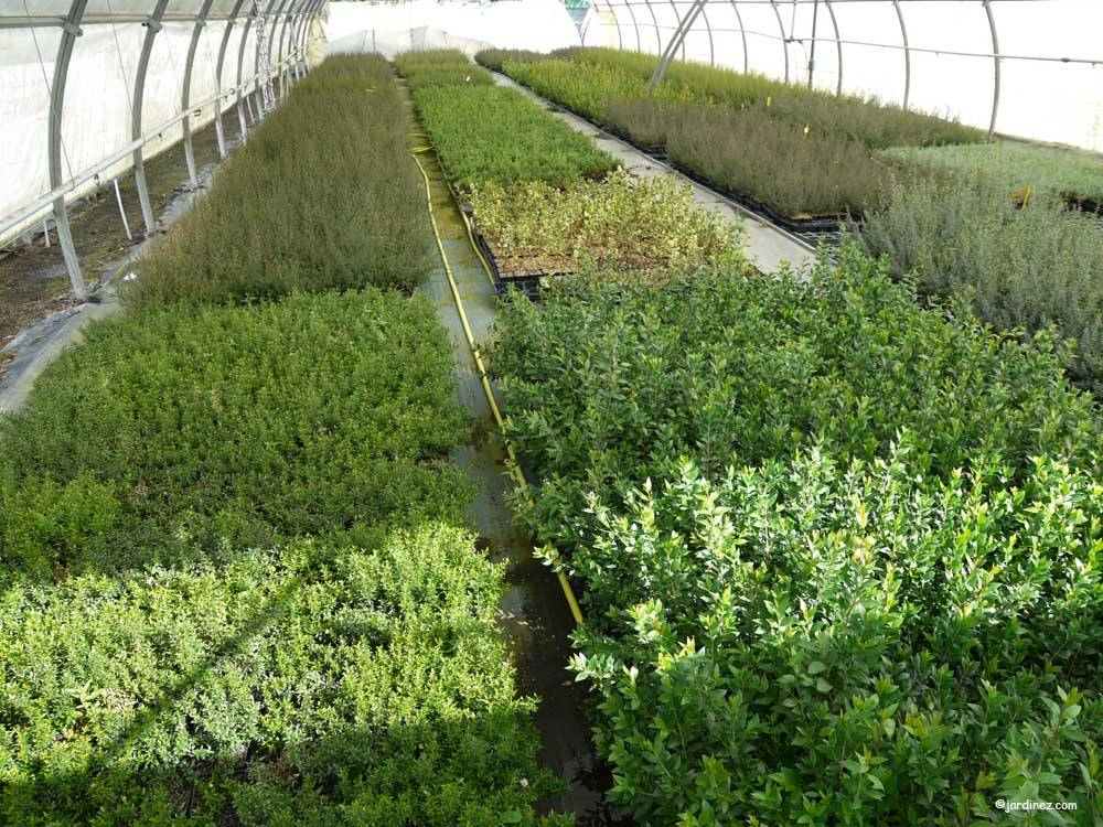 Leaderplant Nursery photo 2