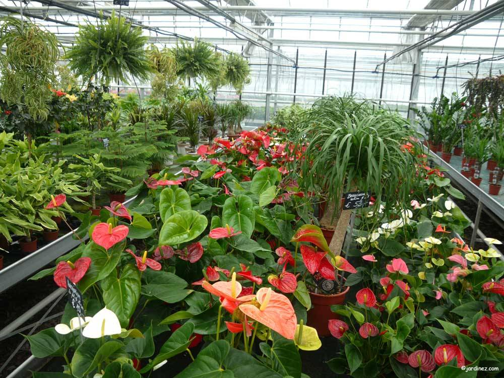 Greenhouses St Georges Horticulture Pavard photo 0