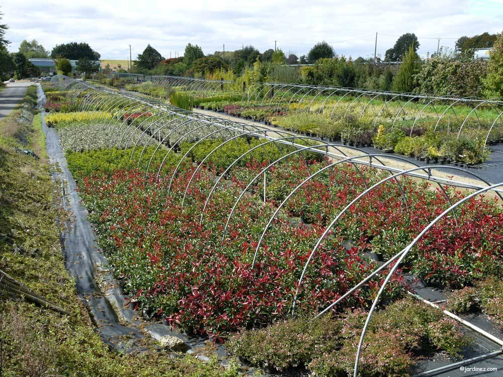 Lecomte Nurseries photo 10