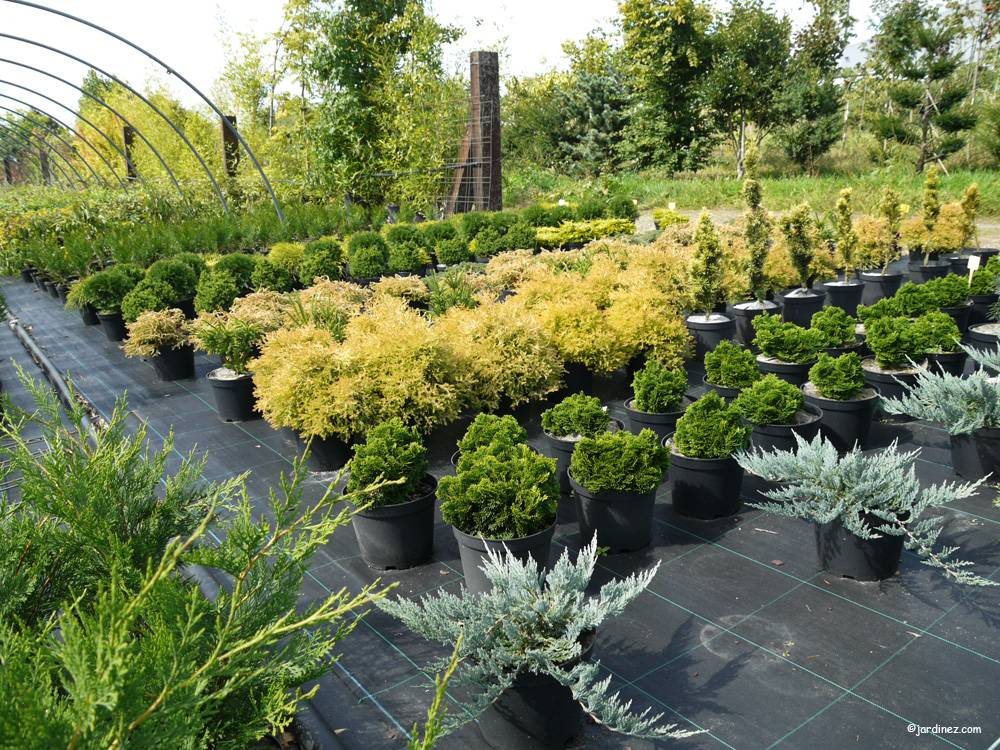 Lecomte Nurseries photo 11