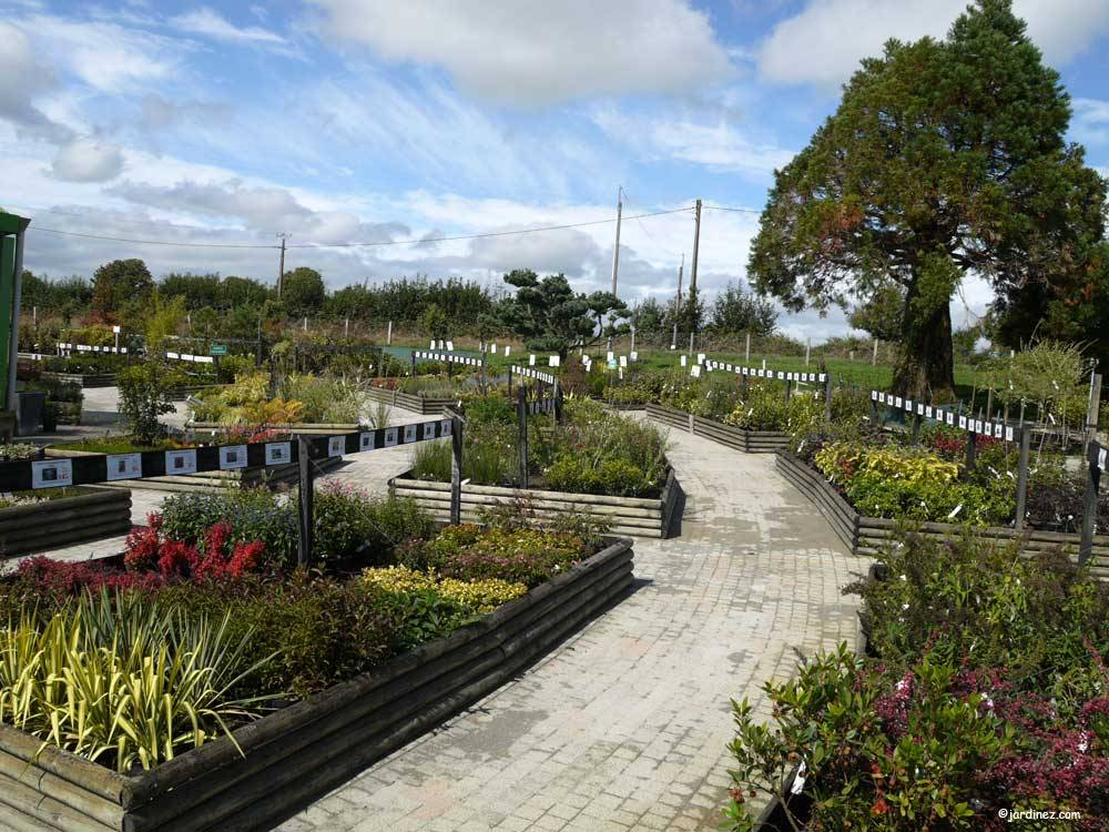 Lecomte Nurseries photo 2