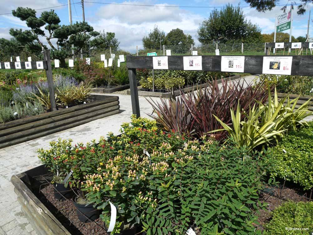 Lecomte Nurseries photo 3