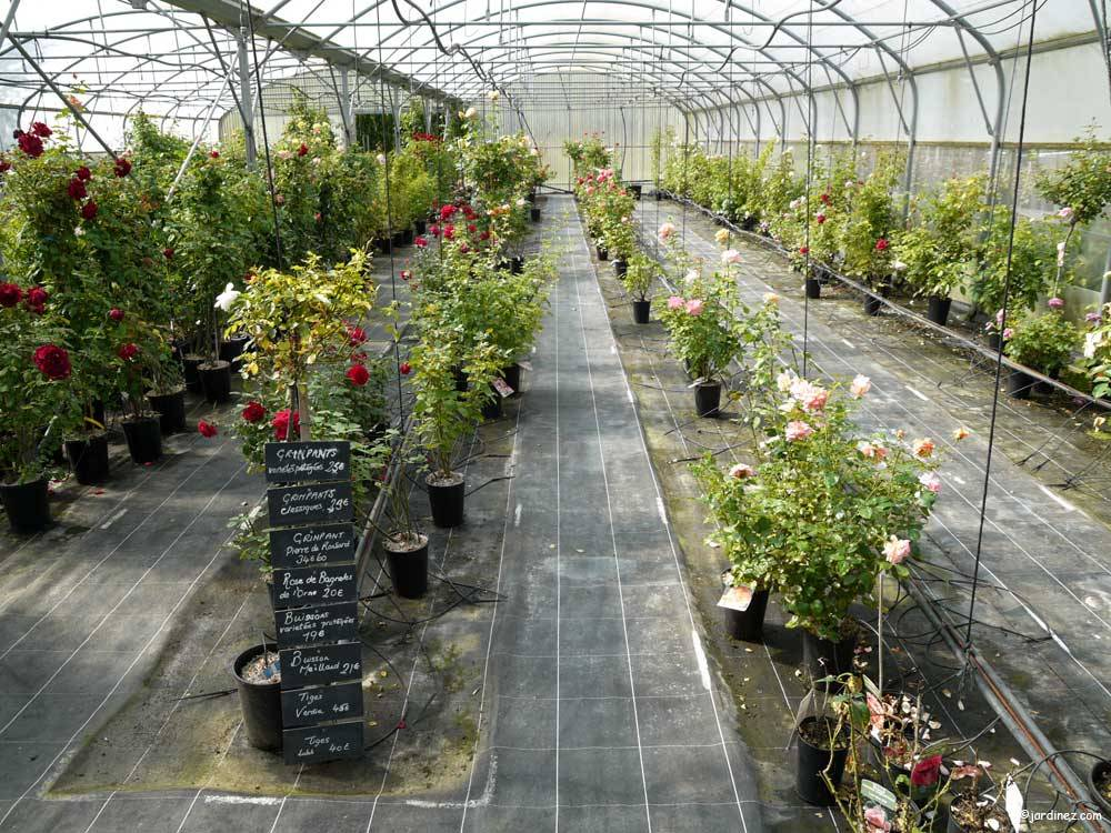 Lecomte Nurseries photo 4