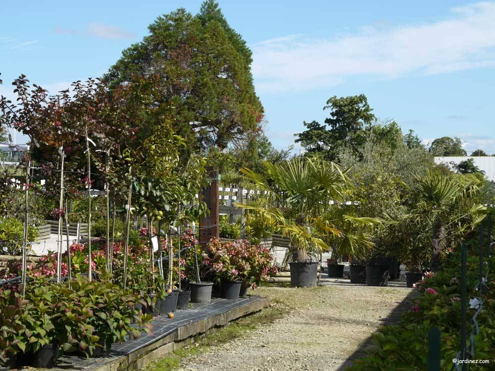 Lecomte Nurseries photo 6