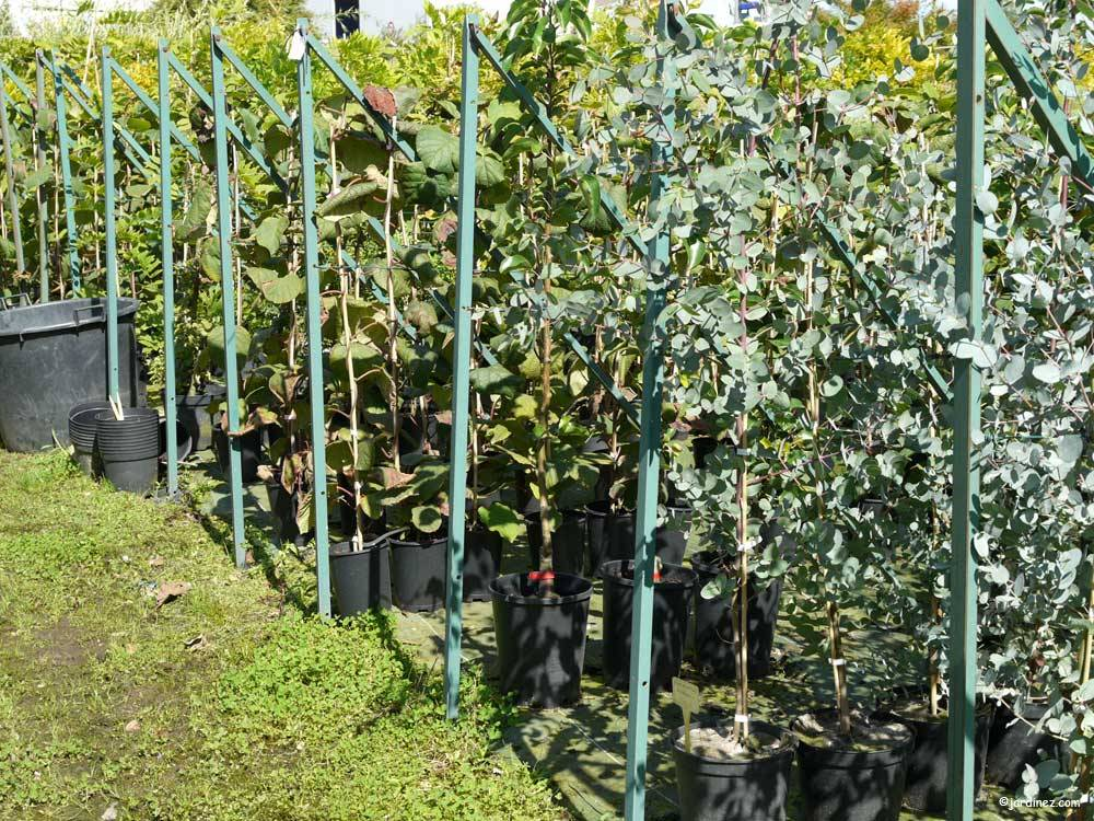 Lecomte Nurseries photo 7