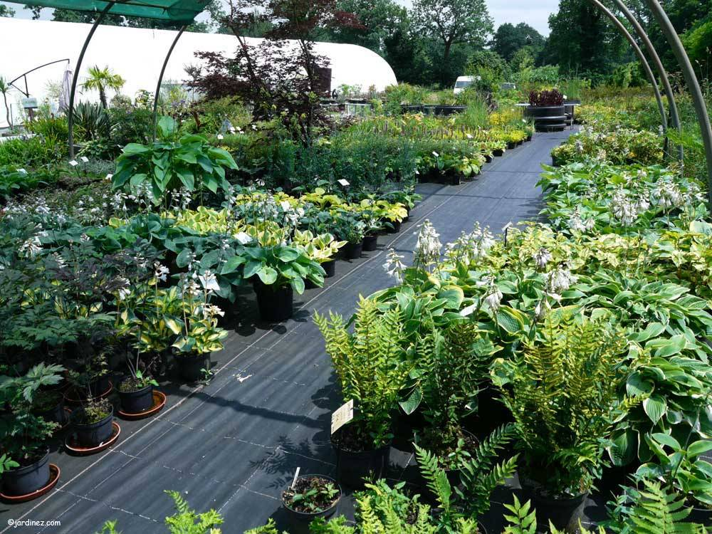 The Ecological Nurseries of Jardin du Prahor photo 1