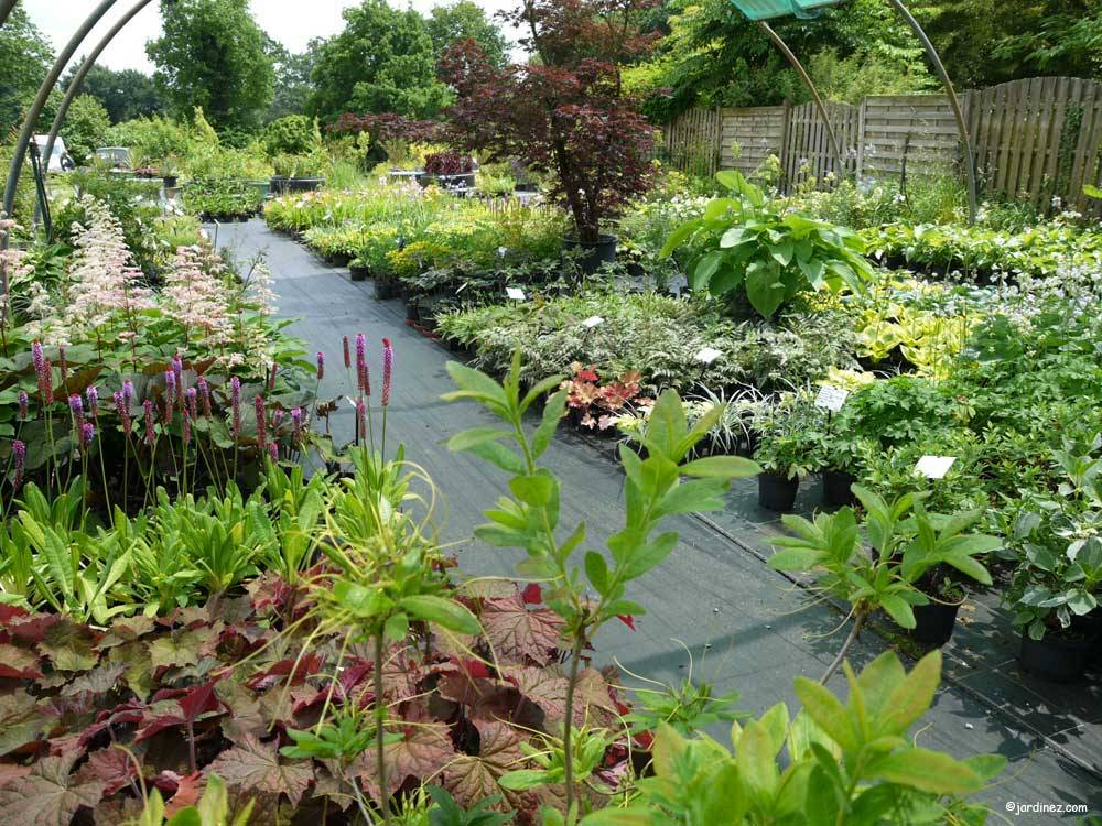 The Ecological Nurseries of Jardin du Prahor photo 3