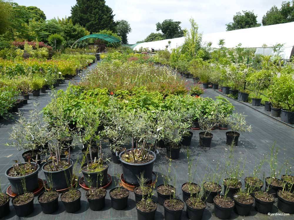 The Ecological Nurseries of Jardin du Prahor photo 8