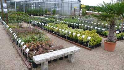 The nurseries of Kerzarc'h photo 0